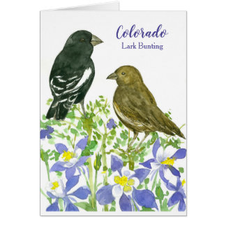 Colorado Lark Bunting State Birds Card