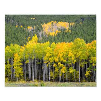 Colorado Mountain fall views Photo
