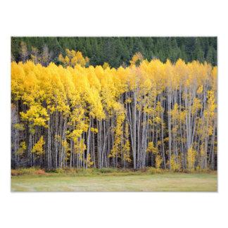 Colorado Mountain Views Photo Art