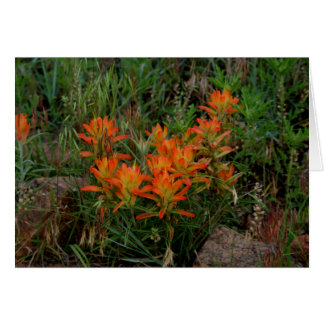 Colorado Scarlet Paintbrush Stationary Note Card