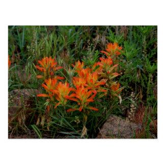 Colorado Scarlet Paintbrush Stationary Postcard