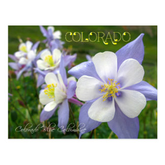 Colorado State Flower: Rocky Mountain Columbine Postcard