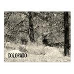 Colorado Wildlife Postcard