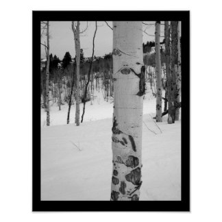 Colorado Winter Aspen Tree Poster