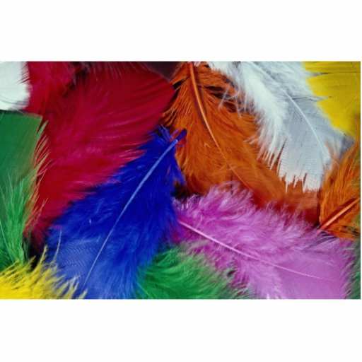 Colored feathers cut out