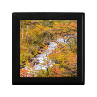 Colored Forest Landscape Scene, Patagonia Gift Box