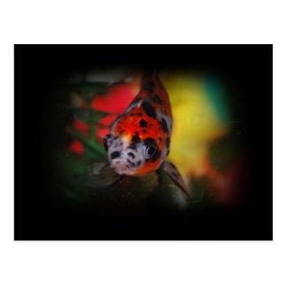 Colored Goldfish Postcard