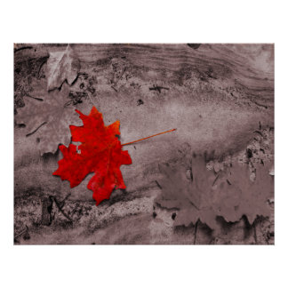 Colored Leaf on Black and White Photo Posters