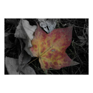 Colored Leaf on ground Poster