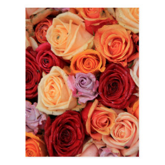 Colored roses by Therosegarden Postcard