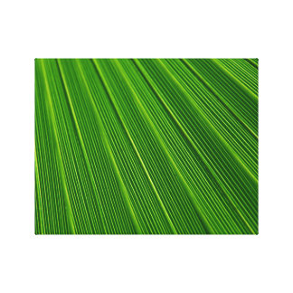 Colorful abstract green palm leaf canvas print