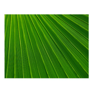 Colorful abstract green palm leaf postcard