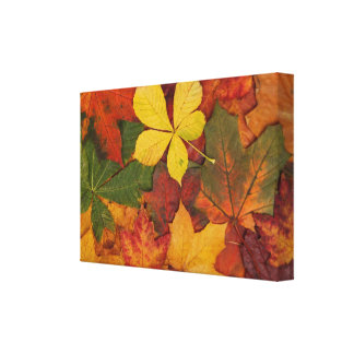 Colorful Autumn Gallery Wrapped Canvas