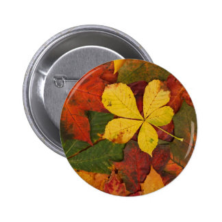 Colorful autumn leafs pinback button