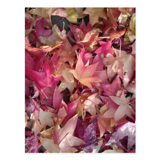 Colorful autumn leafs post card