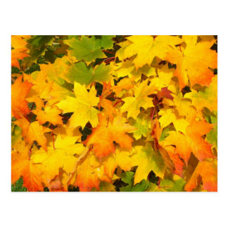 Colorful autumn leafs postcard