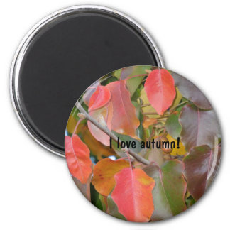 Colorful Autumn Leaves 6 Cm Round Magnet
