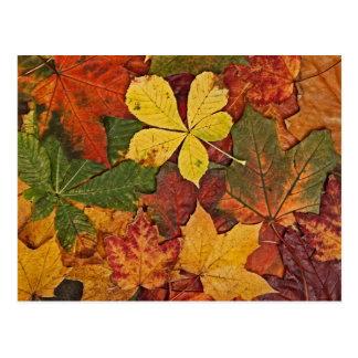 Colorful autumn leaves postcard