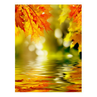 Colorful autumn leaves reflecting in the water 2 postcard