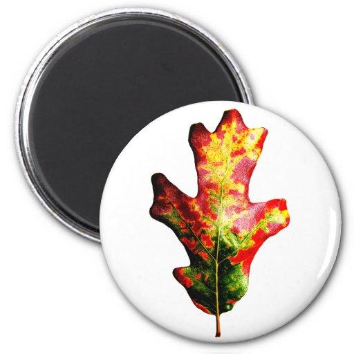 Colorful Autumn Oak Leaf Magnet