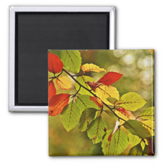 Colorful autumn tree leaves refrigerator magnets
