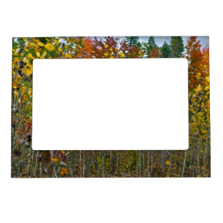 COLORFUL AUTUMN WOODLAND SCENE MAGNETIC PICTURE FR MAGNETIC PICTURE FRAME