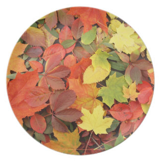 Colorful Background Of Fallen Autumn Leaves Plate