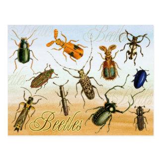 Colorful Beetles Postcard