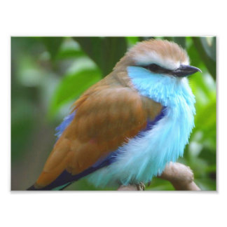 Colorful bird photo print