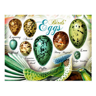 Colorful Birds' Eggs Postcard