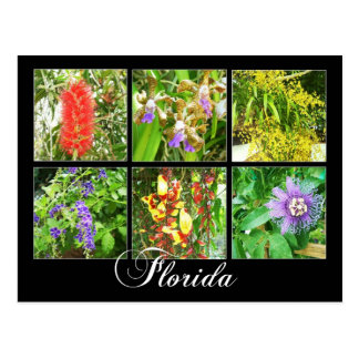 Colorful blooms in Florida Postcard
