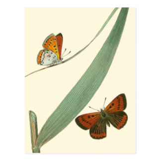Colorful Butterflies Fluttering Around a Leaf Postcard