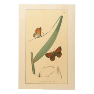 Colorful Butterflies Fluttering Around a Leaf Wood Wall Art