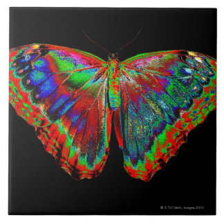Colorful Butterfly design against black backdrop 3 Large Square Tile