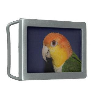 Colorful Caique Parrot Belt Buckle