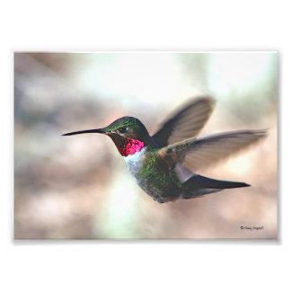 Colorful Capture Photograph