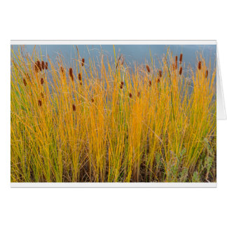 Colorful Cattails Card