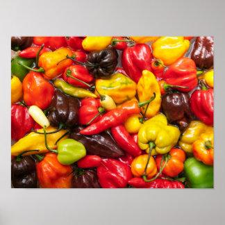 Colorful chili poster