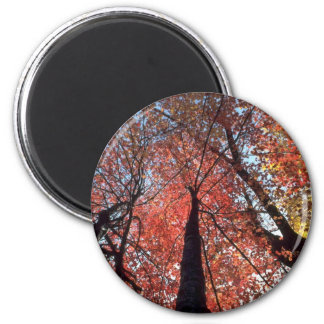 Colorful Colors of the fall season, Upstate New Yo 6 Cm Round Magnet