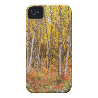 Colorful Countryside iPhone 4 Cases
