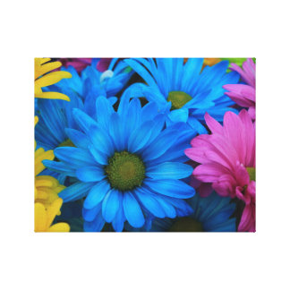 Colorful Daisies 1 Stretched Canvas Print