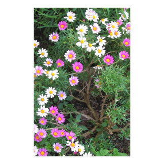Colorful daisies stationery paper