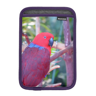 Colorful eclectus parrot ipad mini sleeve