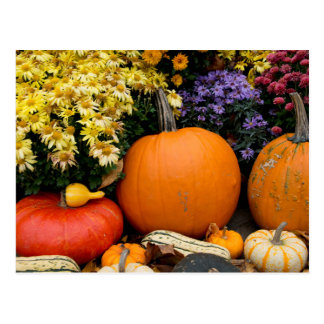 Colorful fall decorative pumpkin display postcard