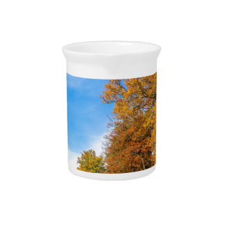 Colorful fall landscape with trees sky and meadow pitcher