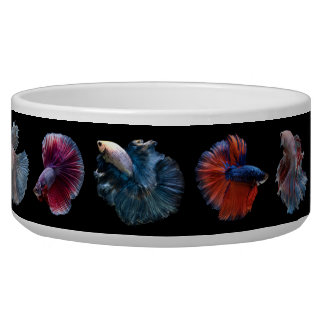 Colorful Fish pet bowls