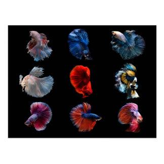Colorful Fish postcard