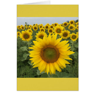 Colorful Floral Yellow Sunflowers Harvest Card
