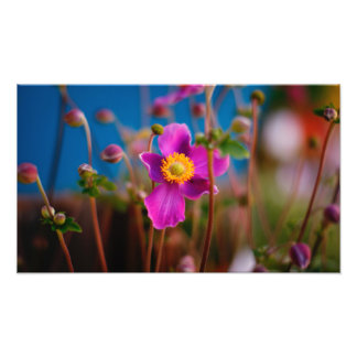 Colorful Flower Art Photograph