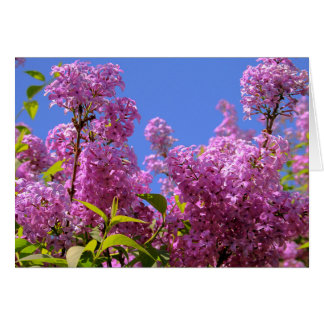 [Colorful Flowers] Lilac Syringa - Any Occasion Card
